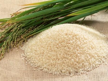 Рис польза и вред для здоровья